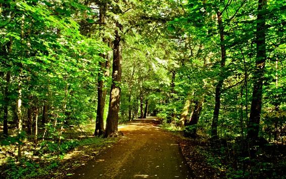 Обои Деревья, дорога, солнце, блики