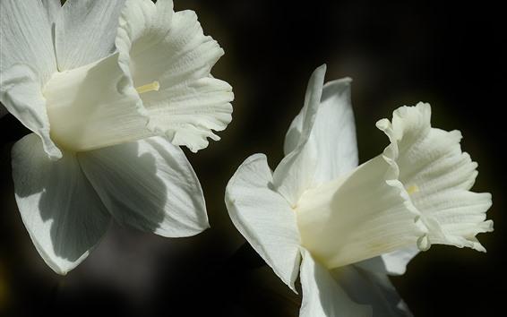 Обои Белый цветок крупным планом, лепестки, серый фон