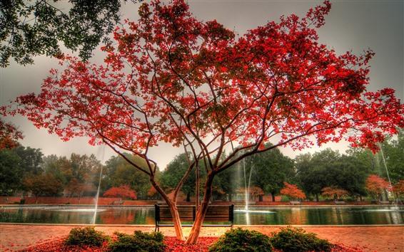 壁紙 秋、公園、池、噴水、木、紅葉