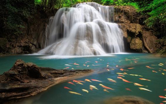Fond d'écran Belles cascades, nombreux poissons
