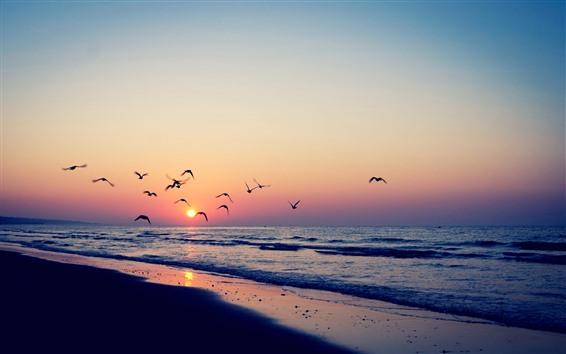 Fond d'écran Oiseaux volant dans le ciel, coucher de soleil, plage, mer