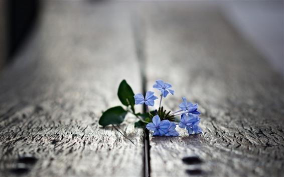 Обои Синие маленькие цветы, дерево, туманно