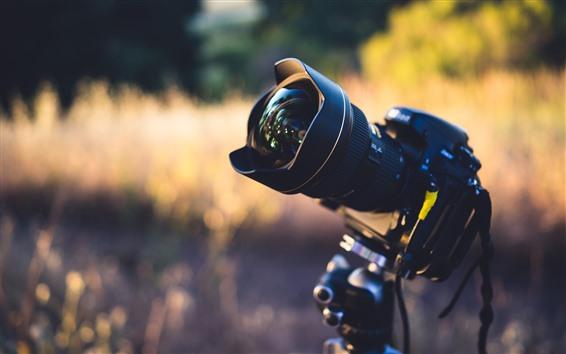 배경 화면 카메라, 렌즈, 자연