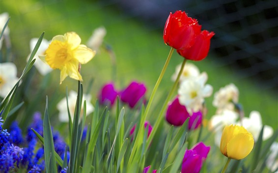 Wallpaper Colorful flowers, tulips, daffodils, spring