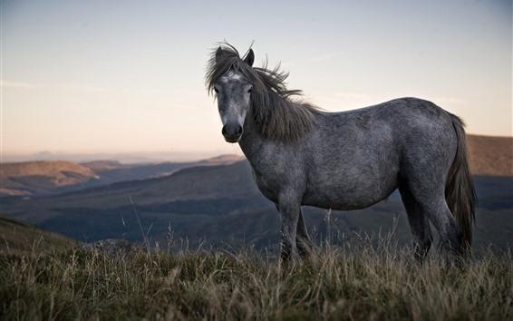 Fond d'écran Cheval gris, herbe, montagnes