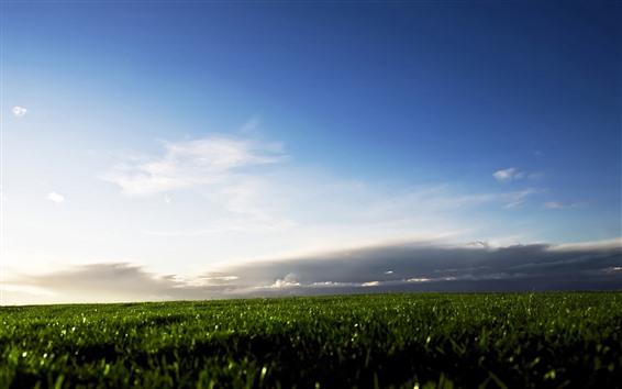 Обои Зеленое поле, облака, небо