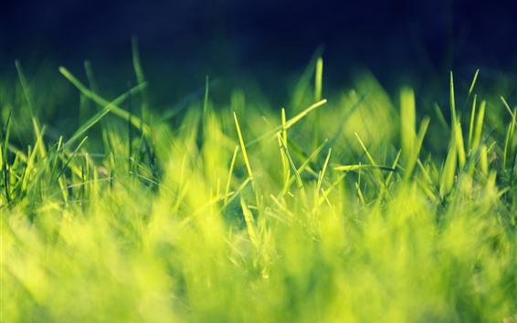Обои Зеленая трава, черный фон, солнце