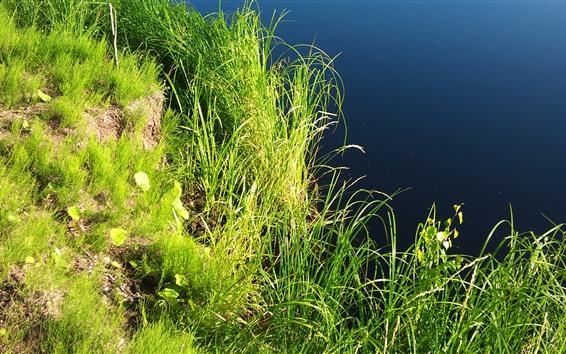 Обои Зеленая трава, пруд