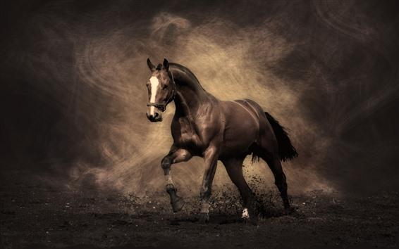 Обои Лошадь, пыль, креатив