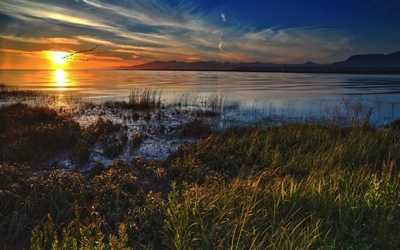 Обои Озеро, стая птиц, закат, трава, осень
