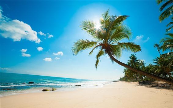 壁纸 棕榈树,海滩,海洋,阳光,热带,蓝天