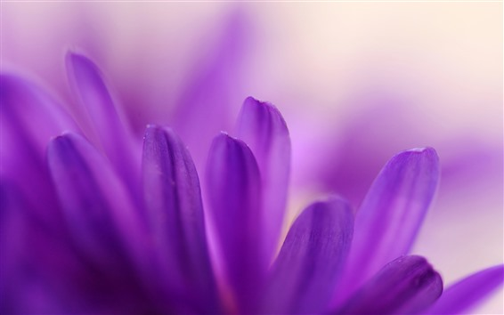 Wallpaper Purple petals close-up, flower, hazy