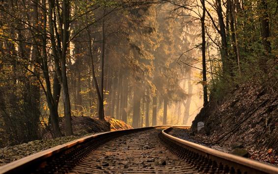 Fond d'écran Chemin de fer, voie, arbres, rayons du soleil