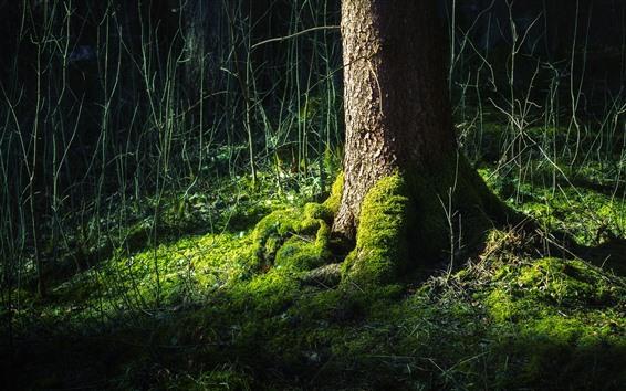 Обои Дерево, ствол, корень, зеленый мох, кусты