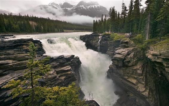 壁紙 木、滝、水のしぶき、自然の風景