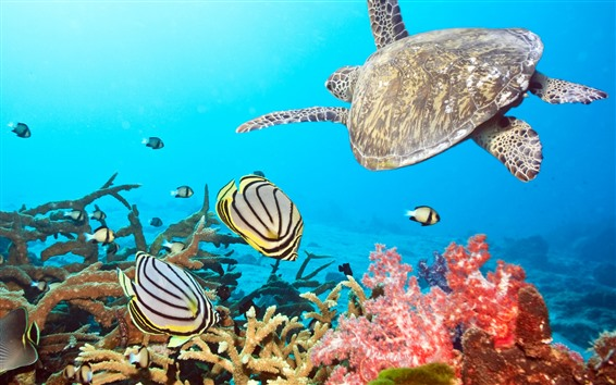 Wallpaper Turtle and fish, sea