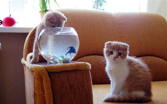 壁紙 2匹の子猫、魚