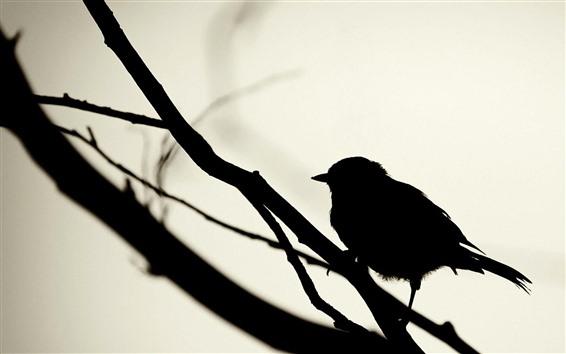Papéis de Parede Pássaro, silhueta, pardal