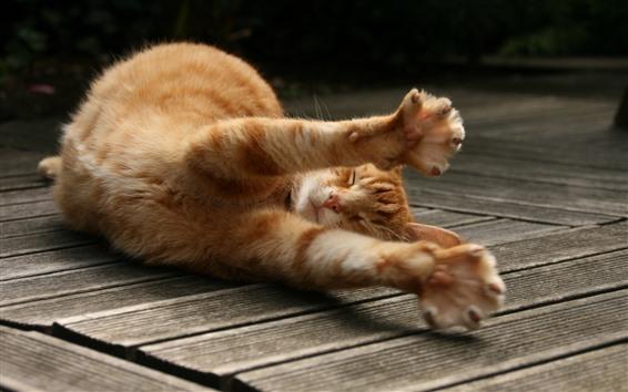Wallpaper Cute orange cat sleep, paws