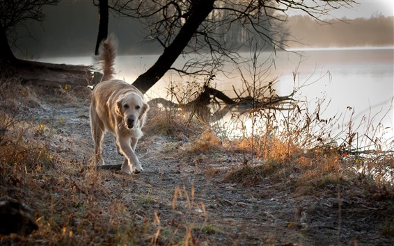 Обои Собака, утро, озеро, туман
