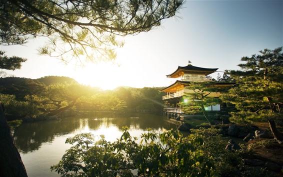 배경 화면 골든 파빌리온 사원, 호수, 나무, 태양 광선, 일본