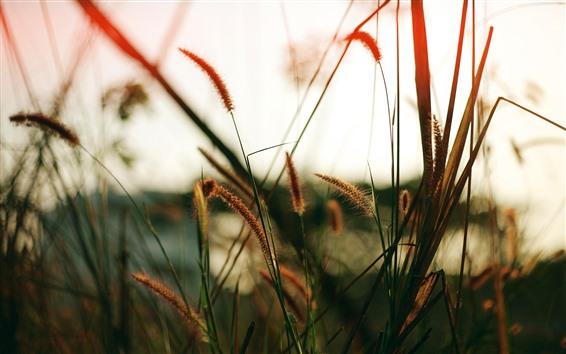 Fond d'écran Gros plan d'herbe, brumeux, paysage naturel