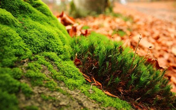 Обои Зеленая трава, земля, макросъемка растений