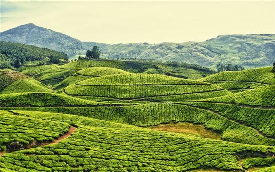 Wallpaper India, green fields