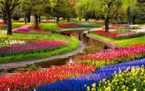 壁紙 多くのチューリップ、川、公園、木、春