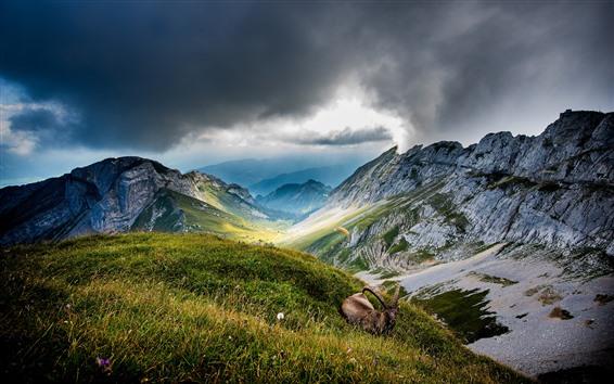Wallpaper Mountains, green grass, antelope, clouds