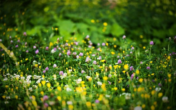 Wallpaper Pink and yellow wildflowers, green grass