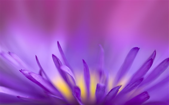 Wallpaper Purple flower petals macro photography, hazy