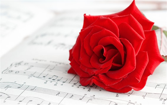 Обои Красная роза, музыка, книга