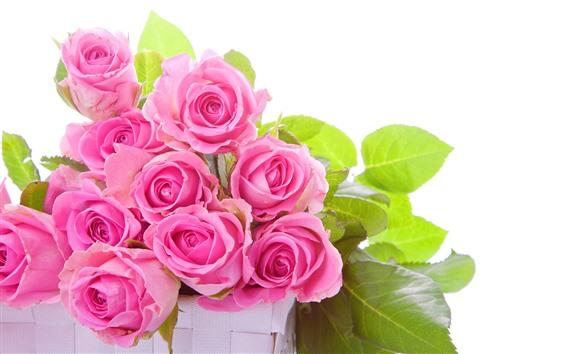 壁紙 いくつかのピンクのバラ、緑の葉、白い背景