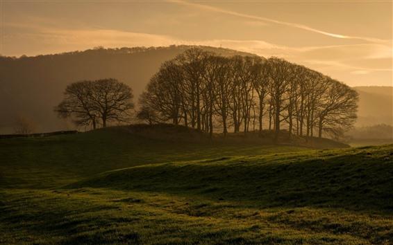 壁纸 一些树,早晨,雾