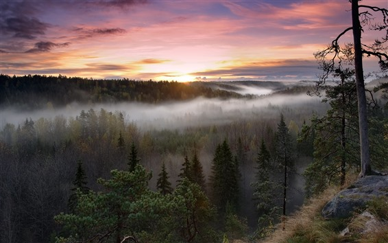 Wallpaper Sunrise, forest, trees, morning, fog