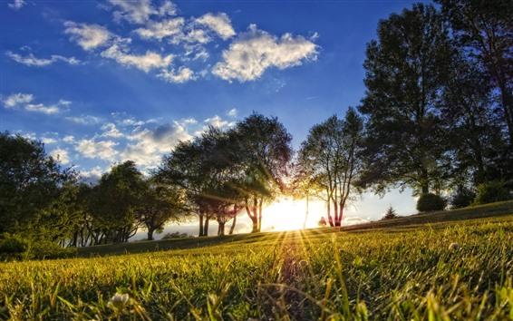 Papéis de Parede Árvores, grama, prado, luz do sol, brilho