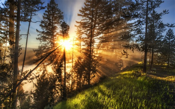 Wallpaper Trees, grass, slope, sun rays, morning