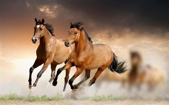 Papéis de Parede Dois cavalos marrons correndo, velocidade