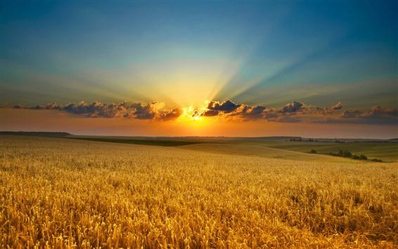 Papéis de Parede Campos de trigo, pôr do sol, nuvens