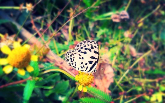 Fondos de pantalla Mariposa blanca, flores amarillas, insecto