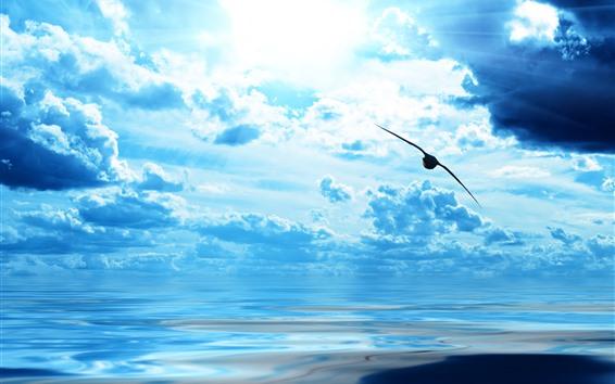 壁纸 蓝天,白云,阳光,鸟飞