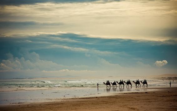 Wallpaper Camels, lake, desert