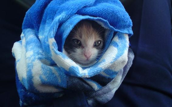 Fondos de pantalla Gato y toalla