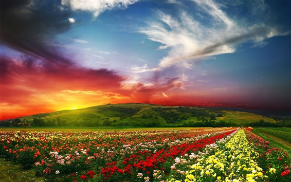 Wallpaper Colorful flowers, flower field, mountain, sunset, clouds