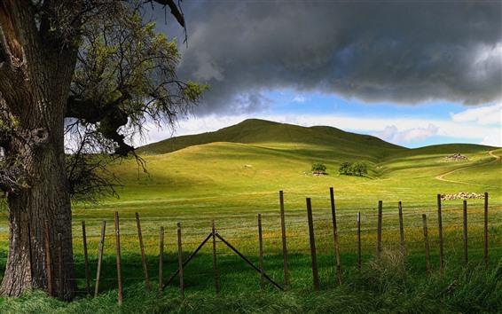 Papéis de Parede Campo, cerca, colina, árvore, verde