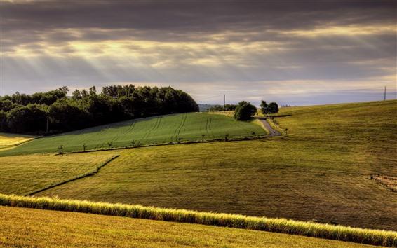 Fond d'écran Campagne, champs, arbres, rayons de soleil, nuages