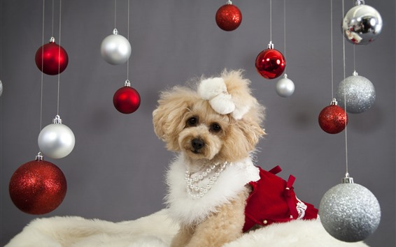 Wallpaper Cute dog and Christmas balls
