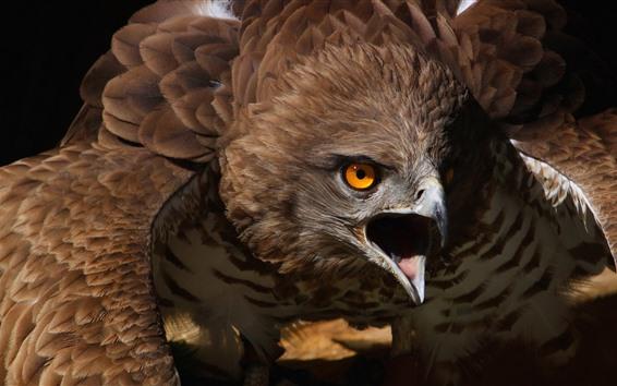 Papéis de Parede Águia, bico, zangado
