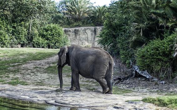 Papéis de Parede Caminhada do elefante, árvores